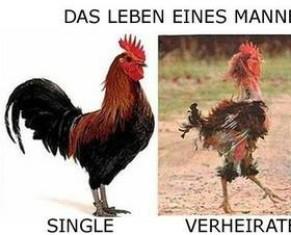 Single mann katze